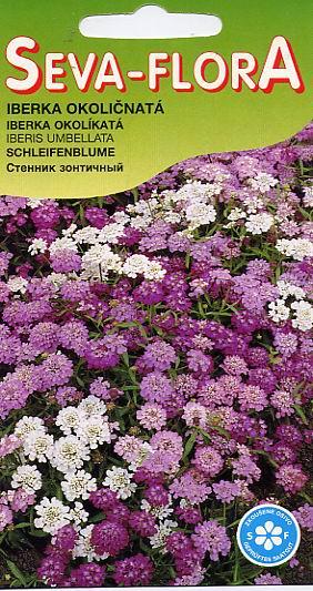 Иберис зонтичный выращивание из семян фото светлячок 54